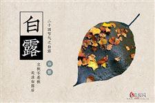 """""""蒹葭蒼蒼,白露為霜"""",盤點白露最美古詩詞"""