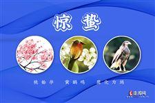 驚蟄三候:桃始華;黃鸝鳴;鷹化為鳩
