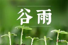 谷雨:雨生百谷,春季的最后一個節氣