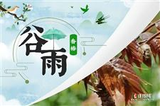 南方摘茶,北食香椿|谷雨吃什么傳統食物