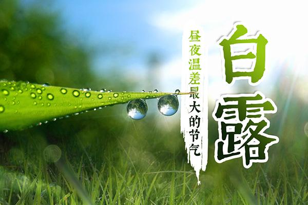 白露,一年中昼夜温差最大的节气,仲秋时节正式开始