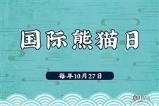 第四个国际熊猫日,关注熊猫宝宝