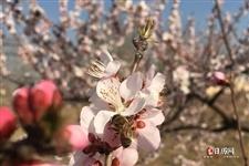 立春和春节生肖哪个真实