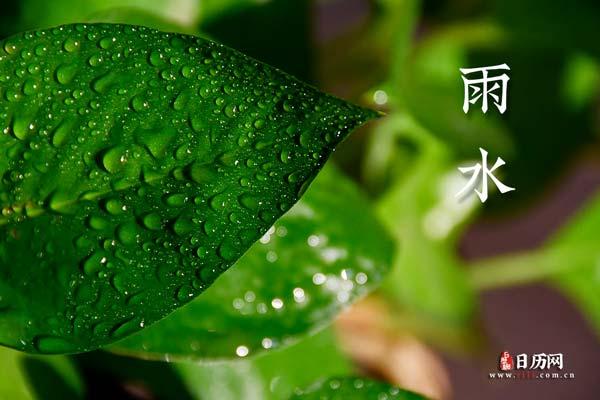 雨水文字绿叶水滴