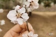 今年广西三月三连休4天,2天是法定的哦!