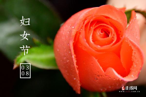 妇女节文字玫瑰花
