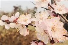 三月三是哪个民族的节日?是什么时候?