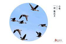 小寒三候:雁北乡,鹊始巢,雉始鸲