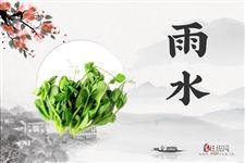 雨水节气应该吃什么:豆苗和荠菜