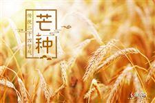 芒种,夏季的第三个节气,仲夏时节正式开始