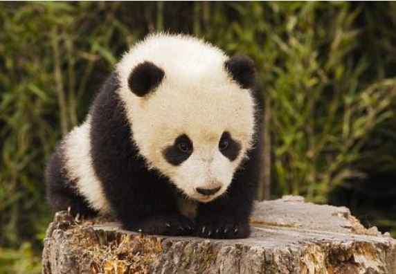 香港清明节放假时间_国际熊猫节(每年9月22日)_日历网